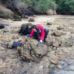 Natalie searching for native oysters