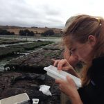 Counting small oysters in the field